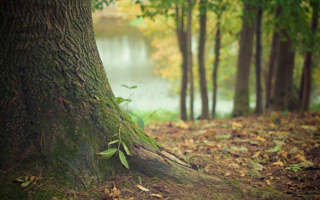 Shinrin Yoku oder mein Abenteuer Waldbaden
